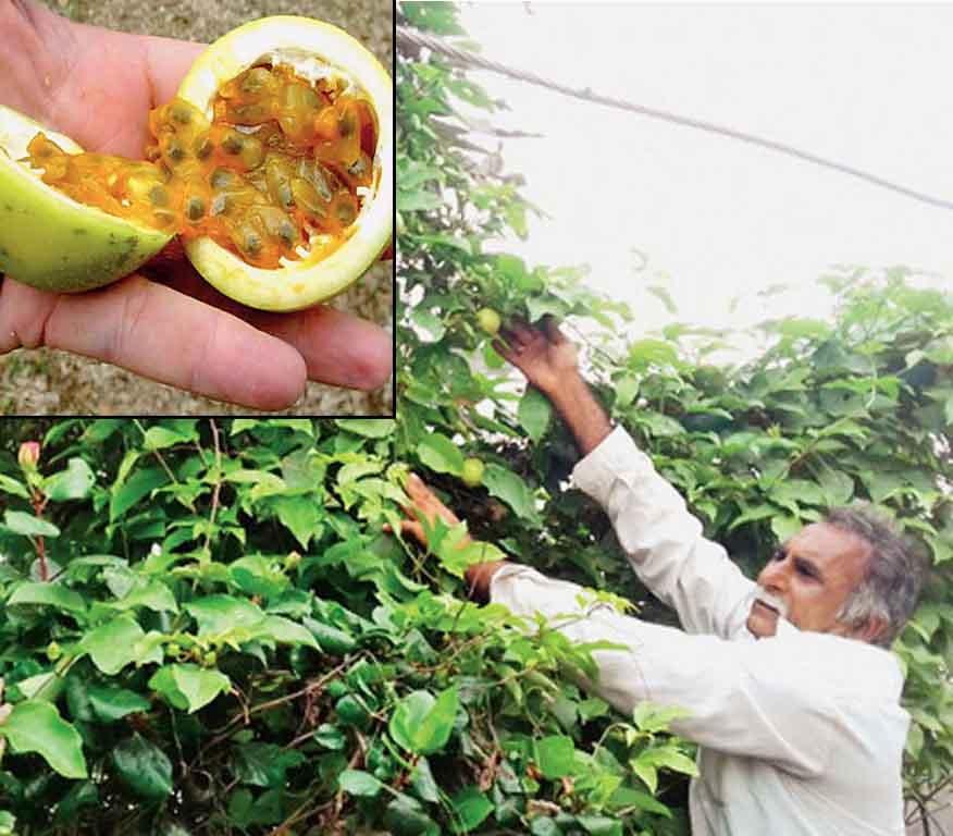 ગુજરાતના આ ખેડૂતે કરી કેન્સરમા અકસીર ગણાતા ફળની ખેતી