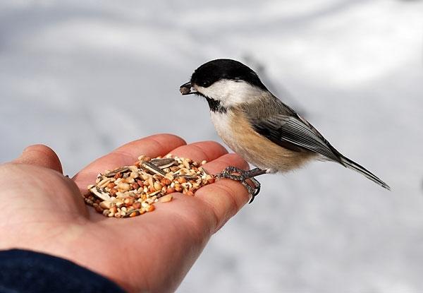આ ભાઈ દર વર્ષે 1.25 લાખ રૂપિયાનું ચણ પક્ષીઓને ખવડાવે છે
