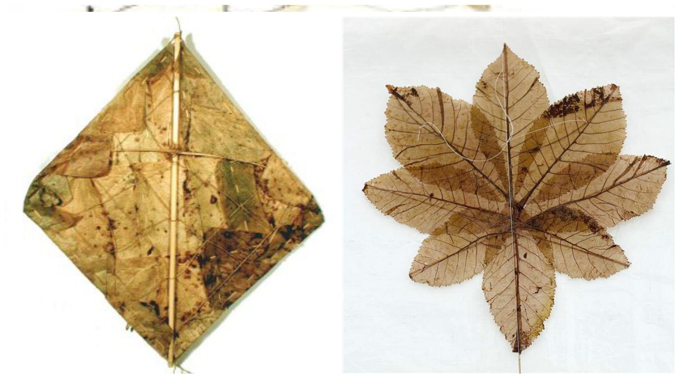 બોલો...સૌથી પહેલો પતંગ ત્રણ હજાર વર્ષ પૂર્વે પાંદડામાંથી બનાવવામાં આવ્યો હતો
