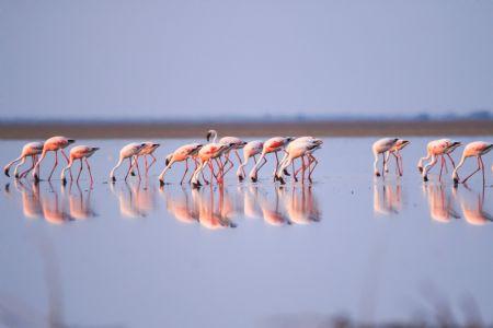કચ્છના નાના રણમાં ઉતર્યું વિશ્વનું ફાસ્ટેસ્ટ બર્ડ, હજારો પક્ષીઓનો જામ્યો 'રણઉત્સવ'