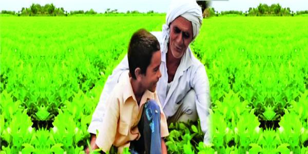 ગુજરાતમાં કૃષિ સંદર્ભિત સ્થિતિ : વિશ્ર્લેષણાત્મક અભ્યાસ