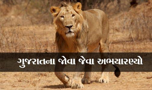 ગુજરાતના આ ૧૩ અભયારણ્યો તમારા પ્રવાસનો આનંદ વધારી દેશે