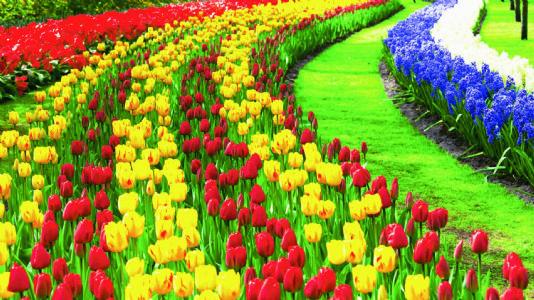 વિચાર વૈભવ : ફૂલોની ફકીરાઈ