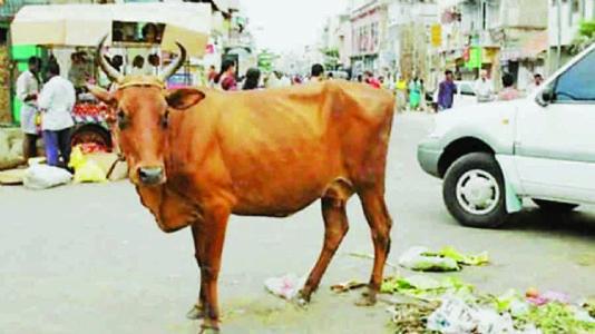 બોલો... દિલ્હીમાં એક મિયાંએ ગાય પર કેસ કર્યો