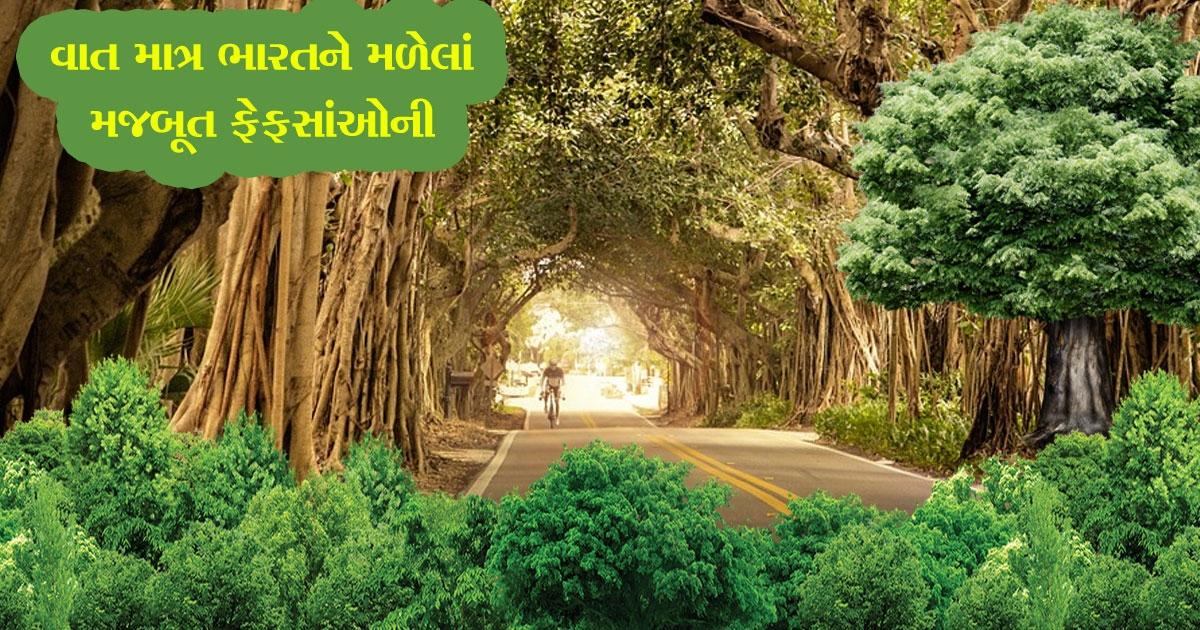 indian tree_1