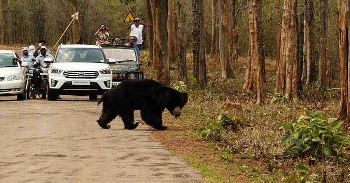 Jessore Bear Sanctuary_1&