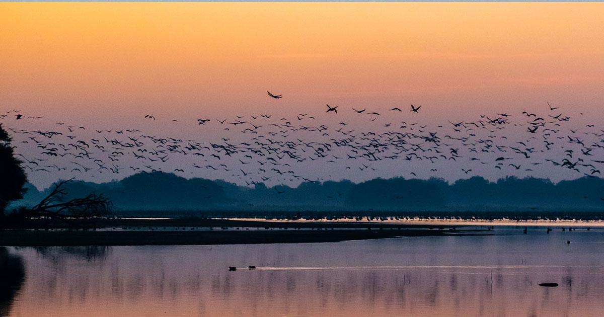 Thol Bird Sanctuary_1&nbs