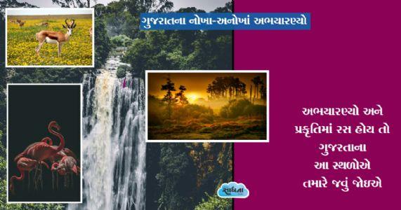 ગુજરાતના નોખા-અનોખાં અભયારણ્યો | અભયારણ્યો અને પ્રકૃતિમાં રસ હોય તો ગુજરતાના આ સ્થળોએ તમારે જવું જોઇએ